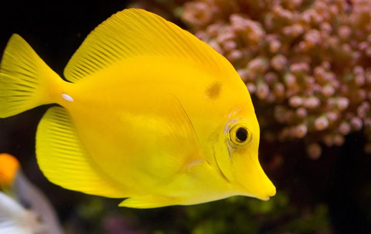 هوش مصنوعی به کمک اقیانوس شناسان می آید