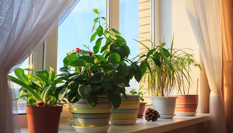 باورهای غلط: بخش اول-گیاهان آپارتمانی هوای خانه را تمیز نمیکنند!